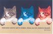 罗克威作品集0094,罗克威作品集,世界设计名家,猫咪 颜色