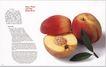 科技电子0064,科技电子,中国优秀商业设计,脚印 海报 苹果 核