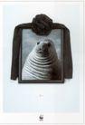 公益0014,公益,中国广告作品年鉴2006,海狮  海洋 生物  保护  水
