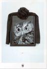 公益0015,公益,中国广告作品年鉴2006,遗像  猫头鹰 瞪着  凶狠  怨恨