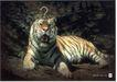 公益0040,公益,中国广告作品年鉴2006,老虎 正面 趴着