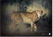 公益0041,公益,中国广告作品年鉴2006,动物 王者 侧面