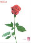 美容卫生用品0021,美容卫生用品,中国广告作品年鉴2006,玫瑰 鲜花 月季