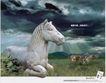 药品及保健品0038,药品及保健品,中国广告作品年鉴2006,马匹 草地 马群