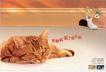 金融保险0043,金融保险,中国广告作品年鉴2006,猫 动物 老鼠
