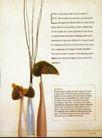 版式设计之图文配合0013,版式设计之图文配合,书籍装帧设计,花 花瓶 插花 艺术 修养 文字说明
