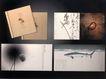 饮食0041,饮食,华文设计年鉴-型录卷,韵味 鱼儿 生物