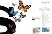 精品数码相机形象海报,POP海报模板九,商业广告模板,蝴蝶 Sony 照相机
