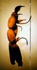 刘国添01,十佳摄影师,广东摄影年鉴2006,虫子 重叠 趴在 攀岩 杆子 扶手