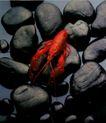 推荐摄影师0042,推荐摄影师,广东摄影年鉴2006,龙虾 石子 海鲜