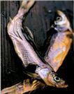 食品饮料保健品医药0018,食品饮料保健品医药,广东摄影年鉴2006,鱼 干枯 咸鱼 制作 销售