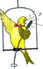 鸟类漫画0649,鸟类漫画,动物,