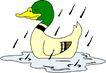 鸟类漫画0666,鸟类漫画,动物,