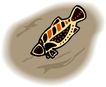 水中动物0977,水中动物,动物,