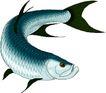 海洋动物2145,海洋动物,动物,