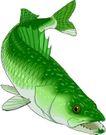 海洋动物2164,海洋动物,动物,