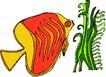 海洋动物2189,海洋动物,动物,