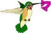 鸟类动物1417,鸟类动物,动物,