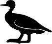 鸟类动物1418,鸟类动物,动物,