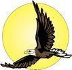 鸟类动物1433,鸟类动物,动物,