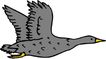 鸟类动物1435,鸟类动物,动物,