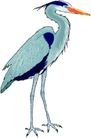 鸟类动物1442,鸟类动物,动物,