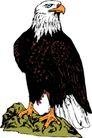 鸟类动物1444,鸟类动物,动物,