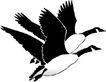鸟类动物1445,鸟类动物,动物,