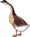 鸟类动物1447,鸟类动物,动物,