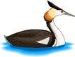 鸟类动物1451,鸟类动物,动物,