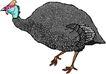 鸟类动物1455,鸟类动物,动物,