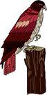 鸟类动物1458,鸟类动物,动物,