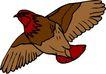 鸟类动物1460,鸟类动物,动物,
