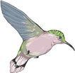 鸟类动物1465,鸟类动物,动物,