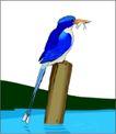鸟类动物1470,鸟类动物,动物,