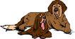 常见动物1031,常见动物,动物,