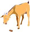 常见动物1053,常见动物,动物,