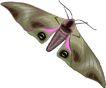 昆虫蝴蝶1041,昆虫蝴蝶,动物,