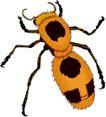 昆虫蝴蝶1052,昆虫蝴蝶,动物,