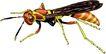 昆虫蝴蝶1053,昆虫蝴蝶,动物,