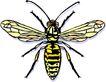 昆虫蝴蝶1054,昆虫蝴蝶,动物,