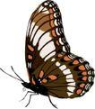 昆虫蝴蝶1055,昆虫蝴蝶,动物,