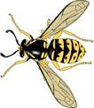 昆虫蝴蝶1059,昆虫蝴蝶,动物,