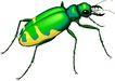 昆虫蝴蝶1065,昆虫蝴蝶,动物,