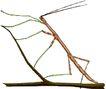 昆虫蝴蝶1070,昆虫蝴蝶,动物,