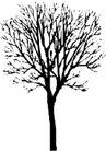 树木1570,树木,植物,