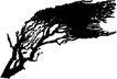 树木1571,树木,植物,