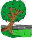 树木1575,树木,植物,