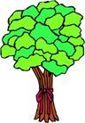 树木1586,树木,植物,
