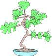 树木1588,树木,植物,